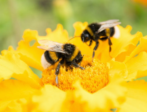 Busy Bees at the Hive an Update from Emma
